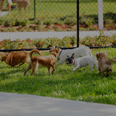 Large Dog Park at Reno Vista Apartments